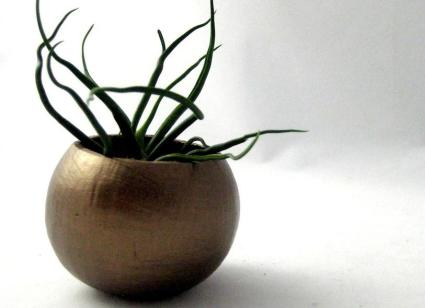 Mini Bulbosa Air Plant Pod